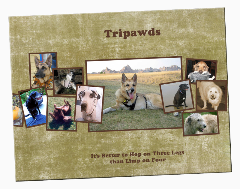 Custom Tripawd Books Now Available!